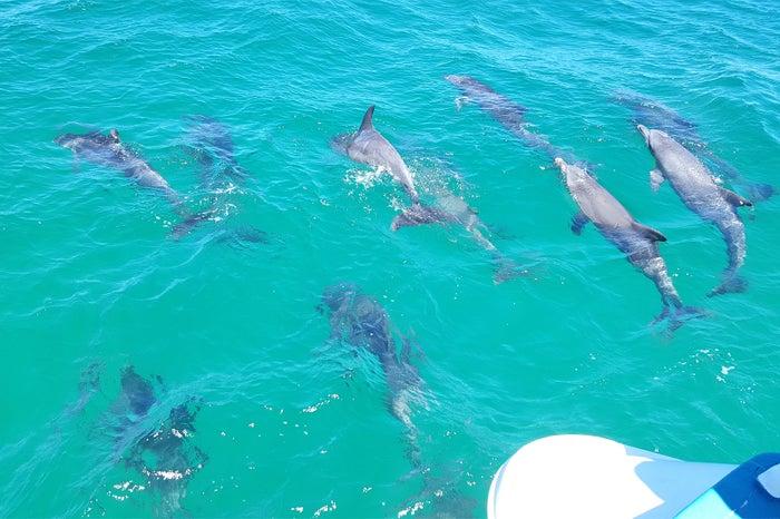 群れになって泳ぐ野生のイルカ、そして、この海の青は感動必至/Moonshadow - TQC Cruises