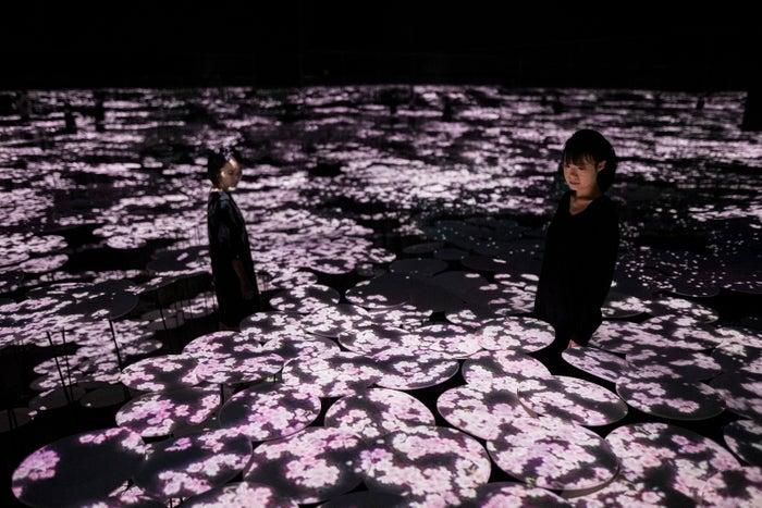 地形の記憶(桜)/画像提供:チームラボ