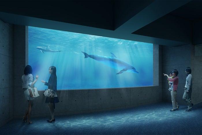 イルカホール/画像提供:四国水族館開発
