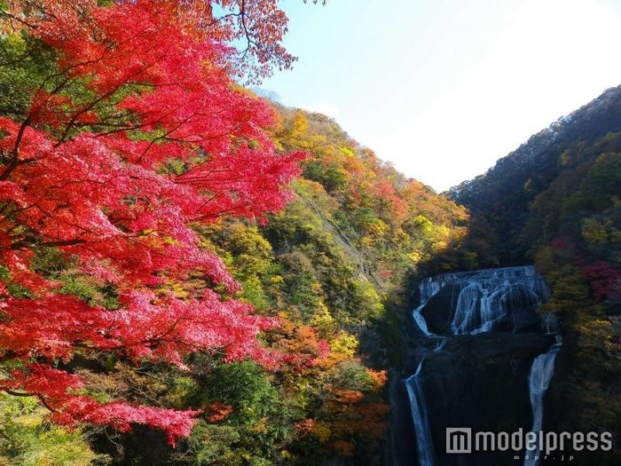 袋田の滝/画像提供:(一社)茨城県観光物産協会