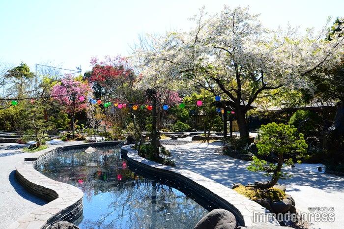 日本庭園をテーマにした足湯(C)モデルプレス