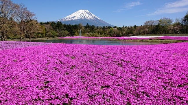 ※写真は昨年の様子/画像提供:富士急行