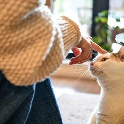 おっとりした飼い猫との少し切ないエピソード