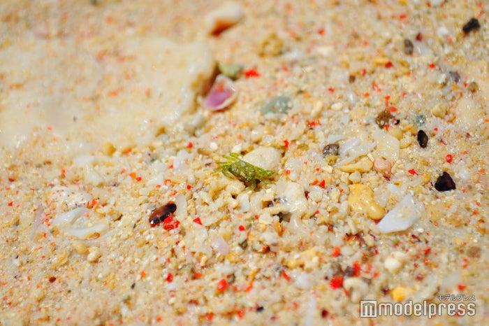 砂に紅い粒が、これがサンゴのかけらなのだとか(C)モデルプレス