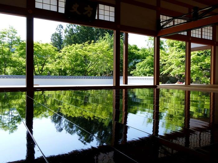 初夏の床もみじ/画像提供:宝徳寺
