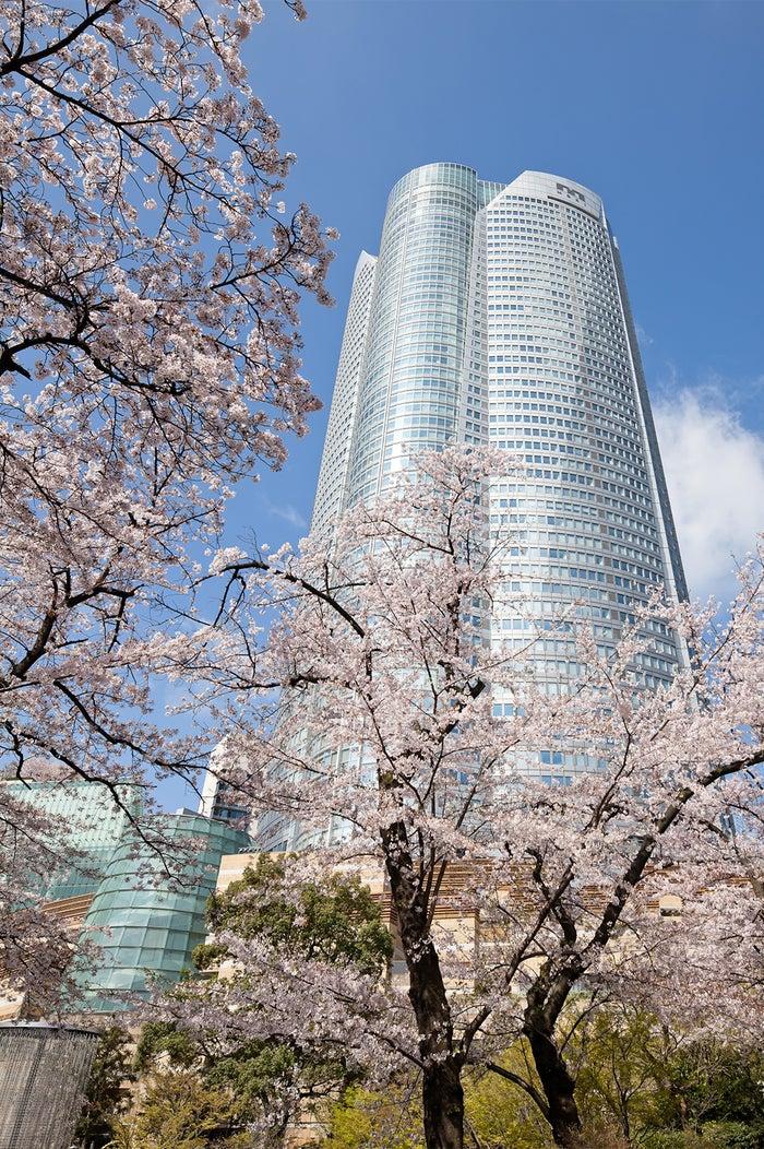 森タワーと桜並木/画像提供:森ビル