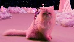 平井堅が魔法使いに!?猫のはるちゃんとも息ぴったり!石井裕也最新作『町田くんの世界』主題歌MV完成