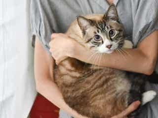 びっくり!いつの間にか家に上がり込んでいた野良猫に心がほっこり♡