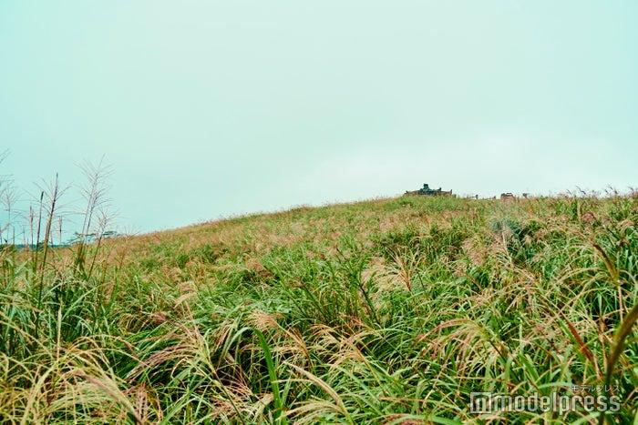 サングムブリとは、チェジュの方言で「山にある穴」を意味しているのだとか。噴火口周辺には希少な植物が自生しています。(C)モデルプレス