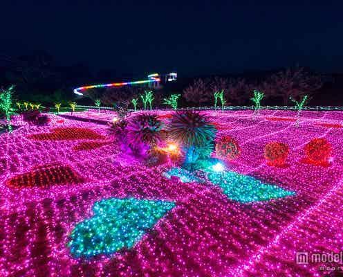 夜景のプロも注目、LED200万球超の新たなイルミ空間が誕生