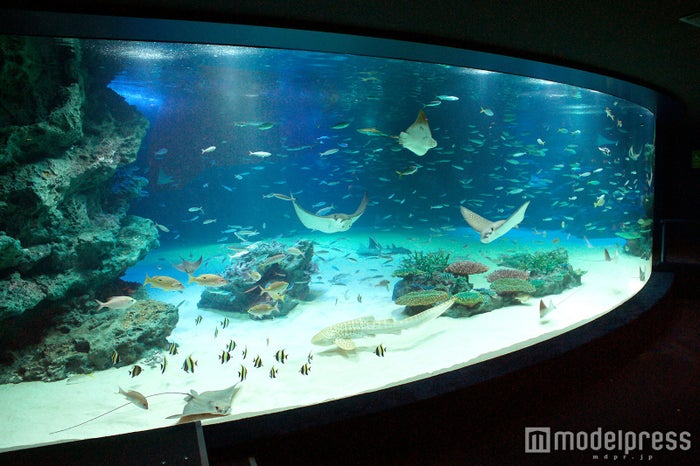 「サンシャイン水族館」が恐怖のお化け屋敷に?初のホラーイベント開催/画像提供:サンシャインシティ
