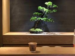 盆栽とコーヒーの素敵な関係!?驚きの新感覚カフェに潜入