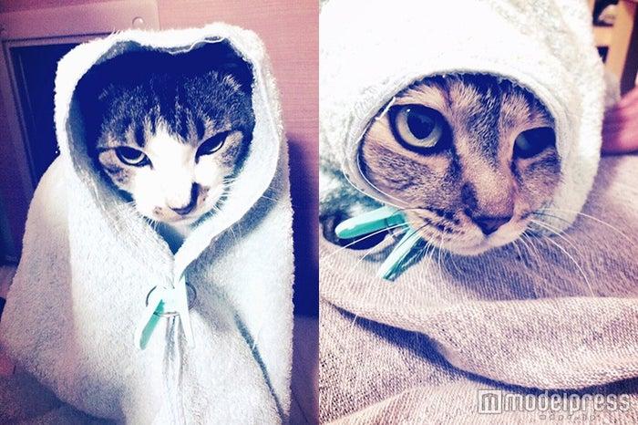 佐藤健の愛猫「こちろー」「ぷちろー」/公式LINEアカウントより(画像提供:所属事務所)