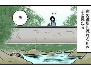 図鑑にも書いていなかった… 動きが遅いイメージのある「カメ」の実態に親子でびっくり!【こどもと見つけた小さな発見日誌 Vol.25】