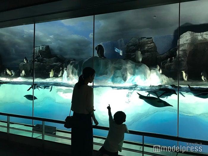 名古屋港水族館のペンギン水槽