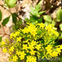 高山植物(C)モデルプレス