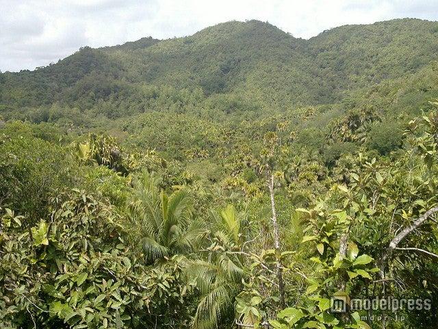 世界遺産「ヴァレ・ド・メ自然保護区」には森の中に散策路が敷かれている/photo by rwiedower