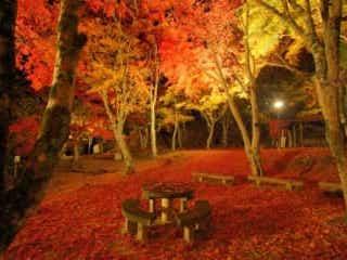 夜の紅葉も美しい…!ライトアップされる京都の「夜紅葉」スポット2選