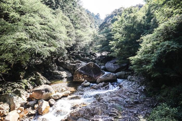 四万十川源流、森の国『水際のロッジ』/画像提供:サン・クレア