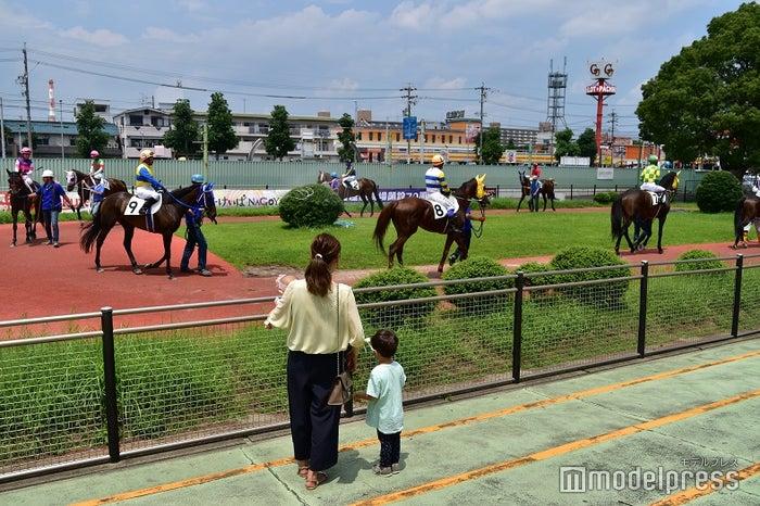 名古屋競馬場のパドック