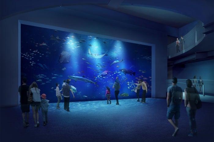 大水槽/画像提供:四国水族館開発