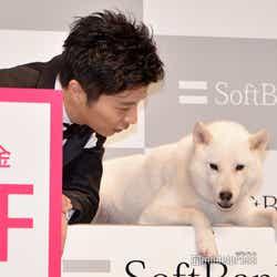 白戸家のお父さんの様子をうかがう田中圭(C)モデルプレス