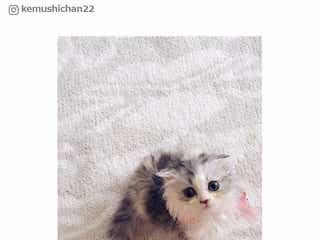 <ねこの日>「ぬいぐるみかな?」芸能人の猫がかわいすぎる問題 小嶋陽菜のけむし、指原莉乃のごろう&たろうほか