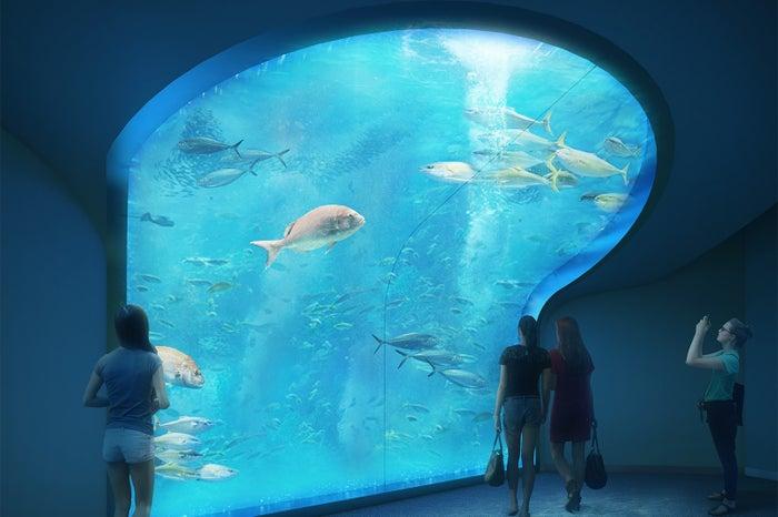 四国水族館/画像提供:四国水族館開発