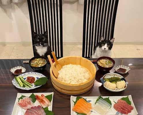 藤あや子、美味しすぎて食べすぎた夕飯を紹介「最高」「食べたい」の声