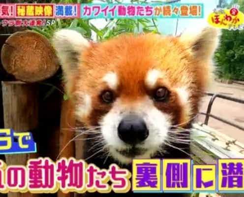 カワイイ姿がSNSで話題に…!人気の動物園・水族館のウラ側