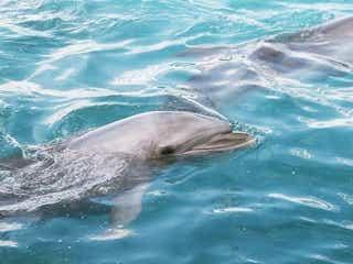 見るだけじゃなくて遊べる?イルカと遊べるおすすめ水族館をご紹介!