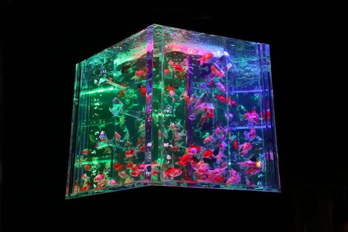 カレイドリウム 3D/画像提供:アートアクアリウム実行委員会