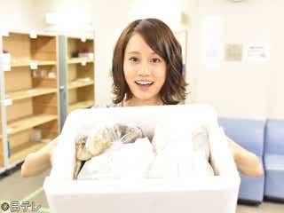 前田敦子、24歳の誕生日にマツケンら『ど根性ガエル』共演者からサプライズ
