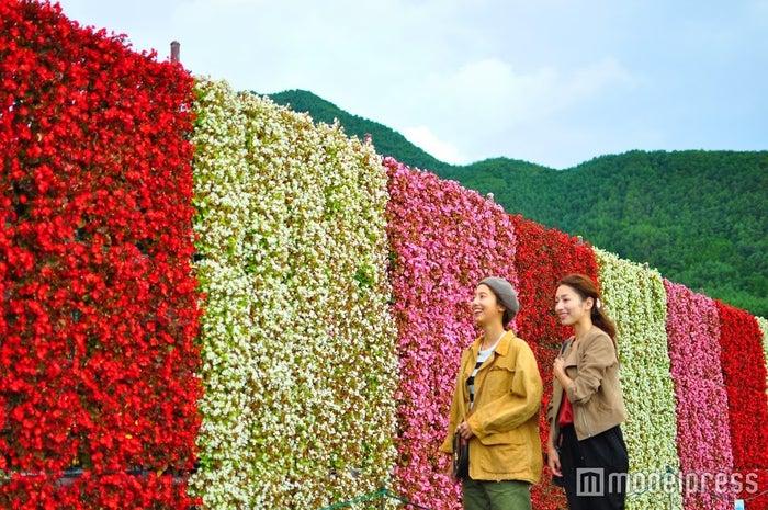 大石公園内のベゴニアの滝、その名も「花のナイアガラ」。ぜったい写真におさめたいスポット(9月下旬まで)(C)モデルプレス