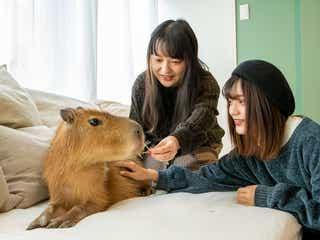 「カピねこカフェ」カピバラ&猫とモフれる!吉祥寺に日本唯一の動物カフェOPEN