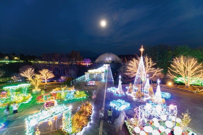美しくライトアップされた園内はロマンチックでさらにうっとり!(提供画像)