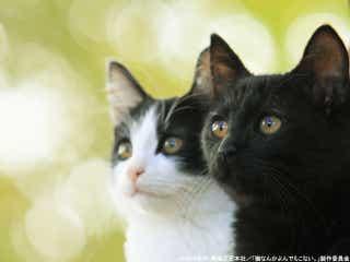 ニャンと!風間俊介主演『猫なんかよんでもこない。』と銀座「ねこ展」がコラボ