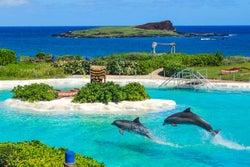 ハワイでかわいいイルカと触れ合える!「シーライフパーク」の感動ツアー