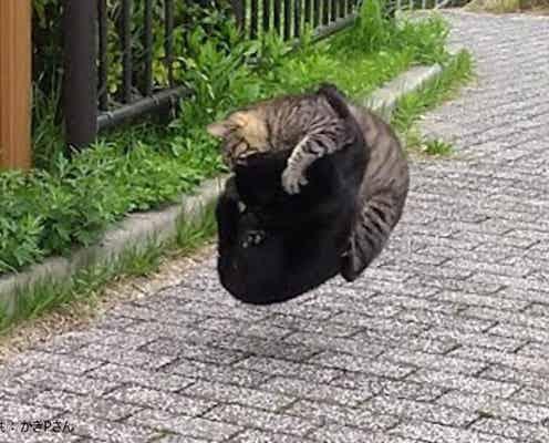 特殊能力を操る猫たちの頂上決戦が話題 「まさか対空戦を行うとは…」