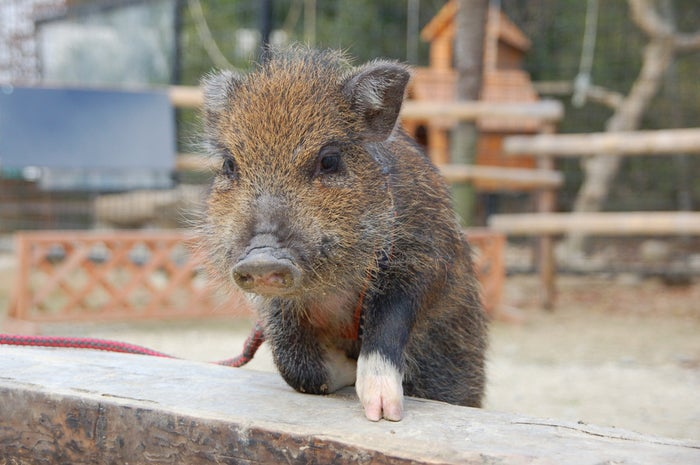 かわいい動物を見れば自然とテンションも上がるもの/photo by GAHAG