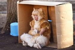 """キスマイ北山宏光、衝撃の""""リアル猫""""姿解禁「手応えを感じている」<トラさん>"""