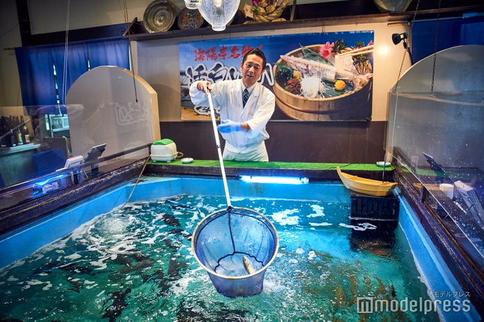 白イカ、アジ、カワハギなど、鳥取港で水揚げされた活魚が泳ぐ、海陽亭の天然生簀(C)モデルプレス