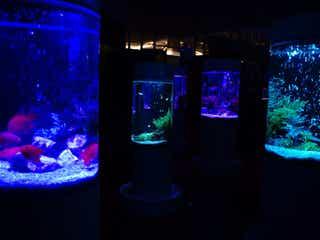 カフェ型水族館「ジュエリーアクアリウム」イオンモール木更津で、2,000匹の魚舞う幻想空間