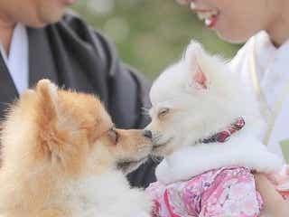 2020年完全版♡愛犬フォト撮影指示書!愛犬と撮りたいウェディングフォトをまとめました◎**