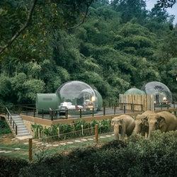 透明ドームから象と星空を眺める!タイのジャングルに佇む宿泊施設が話題