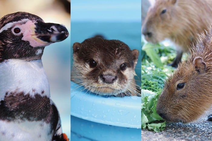 かわいい動物たちを間近で見て、触れる!人数限定の餌やり体験もあります(提供画像)