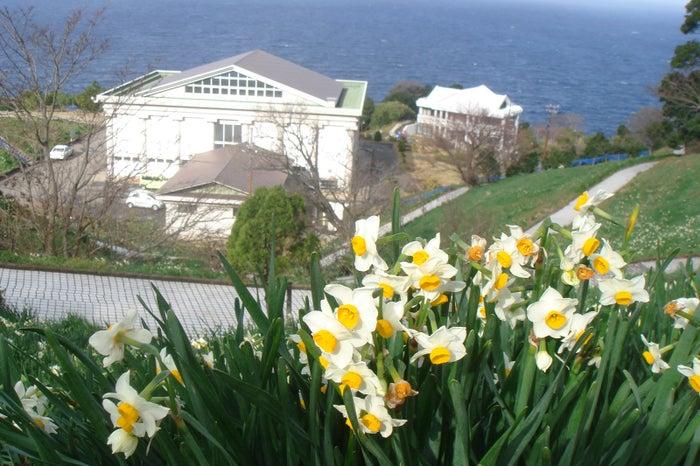 水仙の季節は冬。凛とした冷たい空気に、水仙の高貴な香りが漂います。(提供画像)