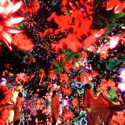 """豊洲に""""2年限定""""巨大デジタルアート空間「チームラボ プラネッツ」がオープン"""