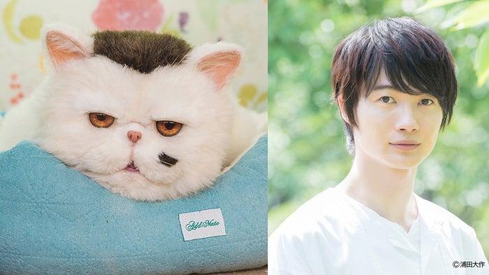 ふくまる、神木隆之介(C)「おじさまと猫」製作委員会