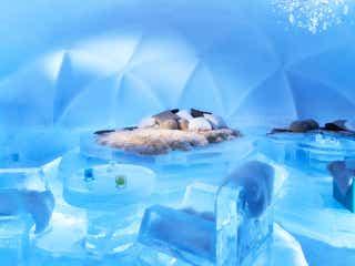 星野リゾート「氷のホテル」で幻想的な宿泊体験、森の中の露天風呂も完備